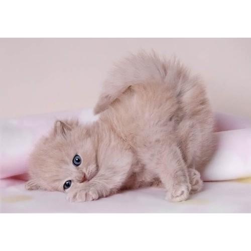 30 ноября во многих странах отмечается World Pets Day - Всемирный день домашних животных